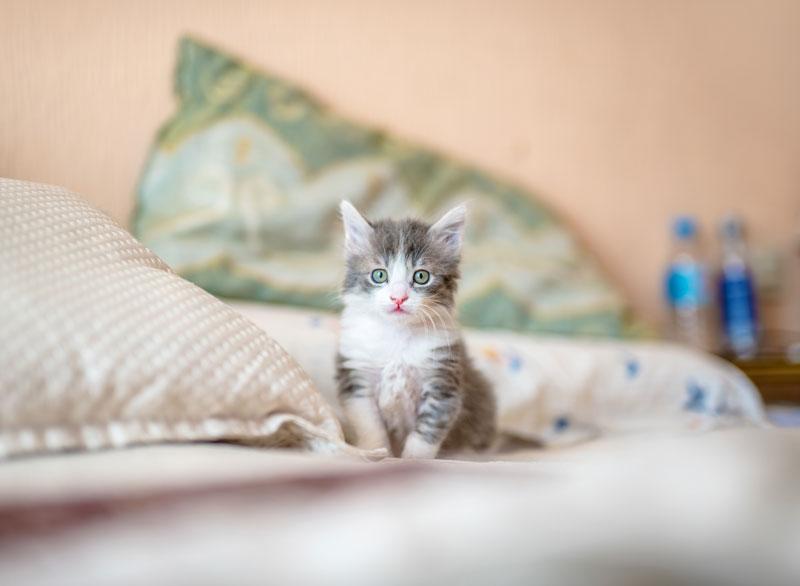 Grieving a Kitten